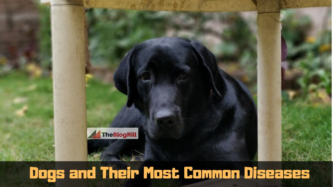 Dogs and Their Most Common Diseases (1)